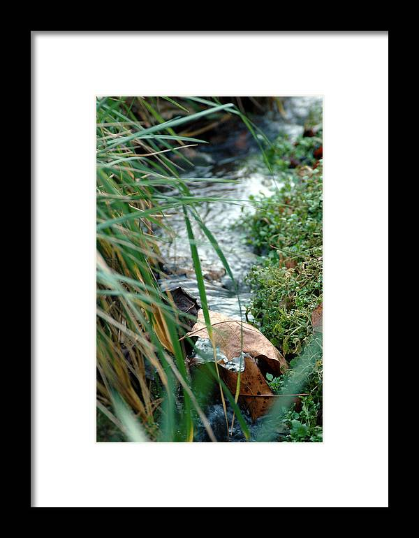 Stream Framed Print featuring the photograph Untitled by Kathy Schumann
