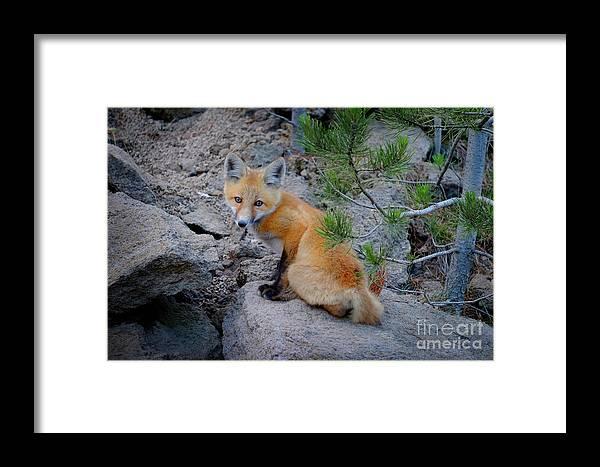 Action Framed Print featuring the photograph Wild Fox Near Den In Wilderness Animals by Lane Erickson