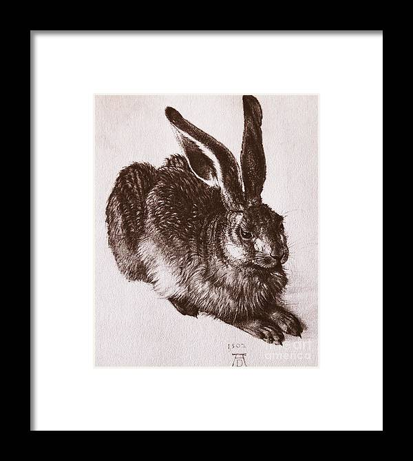 Durer Framed Print featuring the drawing Young Hare by Albrecht Durer
