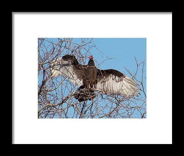 Birds Framed Print featuring the photograph 2000-buzzardjan2011 by Martha Abell