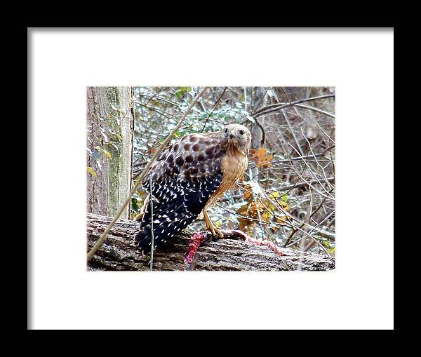 Hawk Framed Print featuring the photograph 2005-hawk And Snake by Martha Abell
