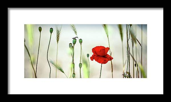 Poppy Framed Print featuring the photograph Summer Poppy Meadow by Nailia Schwarz