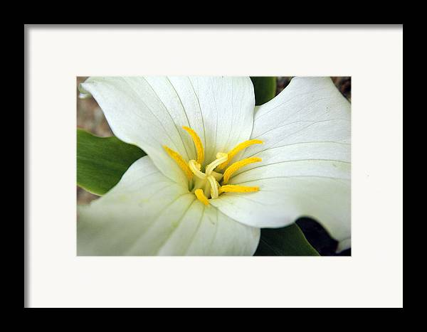 White Framed Print featuring the photograph Untitled by Kathy Schumann