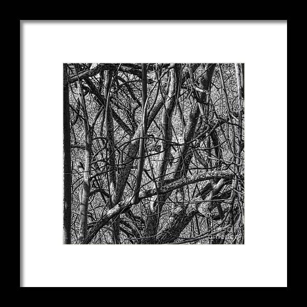 Nature Framed Print featuring the photograph Msc by Caddelle Faulkner