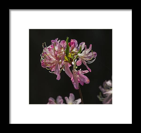 Spring Flowers Framed Print featuring the photograph Spring Flowers by Robert Ullmann