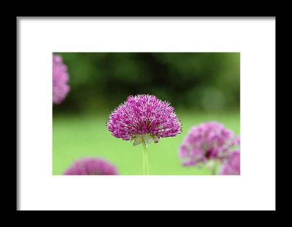Purple Framed Print featuring the photograph Untitled by Kathy Schumann