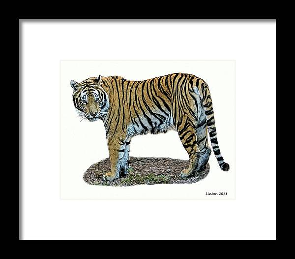 Asian Tiger Framed Print featuring the digital art Asian Tiger by Larry Linton