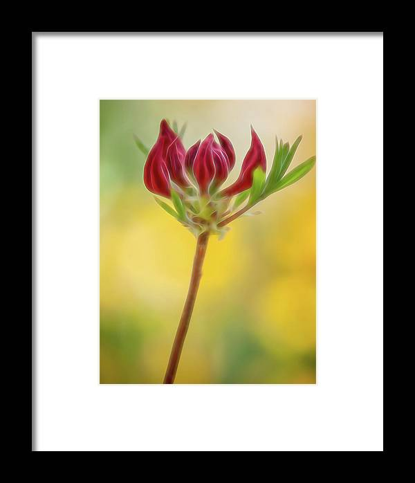 Atlanta Framed Print featuring the photograph Azalea Buds by Mark Chandler