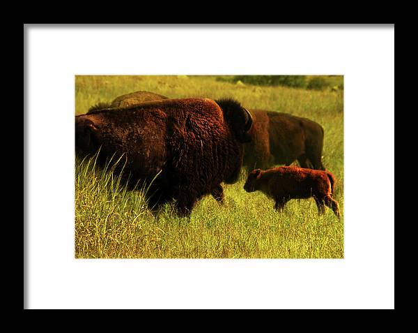 Bisons Framed Print featuring the photograph Bisons by Iris Greenwell