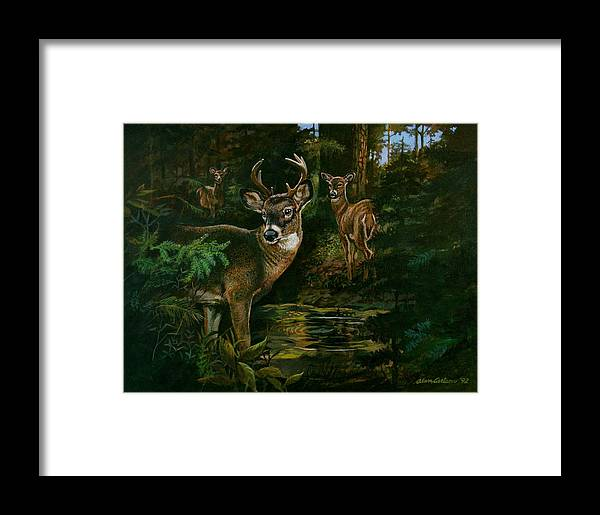 Deer Framed Print featuring the painting 3 Deer Watching by Alan Carlson