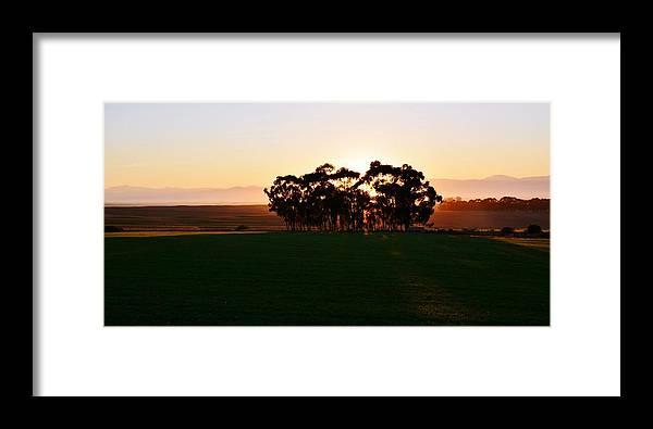Landscape; Orange; Sunrise; Blue Gum Trees; Farm Land; Sun; Morning Light; Sky; Swartland; South Africa; Rural; Eucalyptus Trees; Framed Print featuring the photograph Eucalyptus Trees by Werner Lehmann