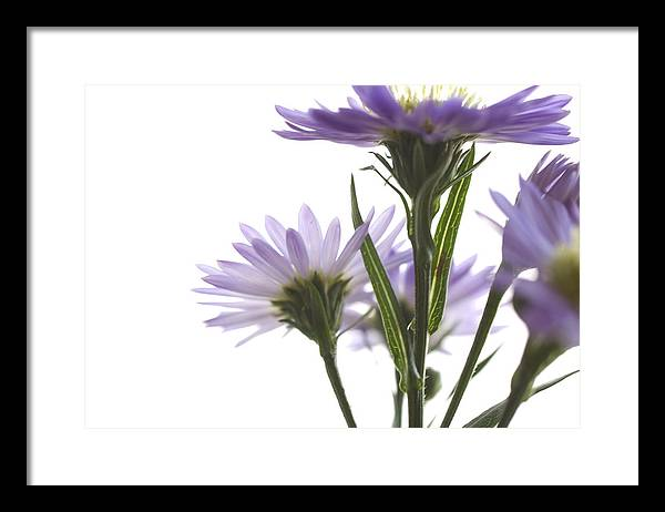 Flowers Framed Print featuring the photograph Flower Abstract by Jessica Wakefield