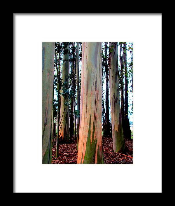 Trees Framed Print featuring the photograph Gum Trees by Joyce Woodhouse