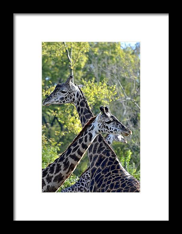 Animals Framed Print featuring the photograph 3 Heads Are Better Than 1 by Jan Amiss Photography