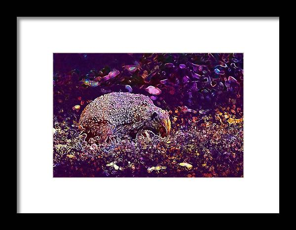 Hedgehog Framed Print featuring the digital art Hedgehog Animal Spur Nature Garden by PixBreak Art