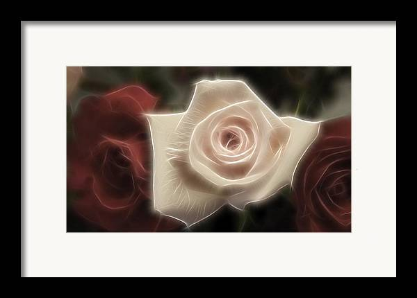 Red Framed Print featuring the photograph 3 Little Roses For Patrice by Kevin Sherf
