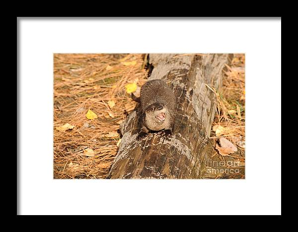 River Otter Framed Print featuring the photograph River Otter by Dennis Hammer