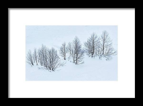 Svetlana Sewell Framed Print featuring the photograph Trees by Svetlana Sewell