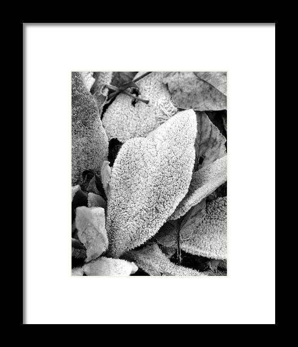 B&w Framed Print featuring the photograph Untitled by Kathy Schumann