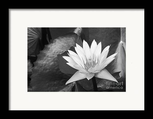 Art Medium Framed Print featuring the photograph Water Lily by Bill Brennan - Printscapes