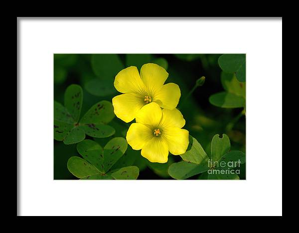 Flowers Framed Print featuring the photograph Flowers by Marc Bittan