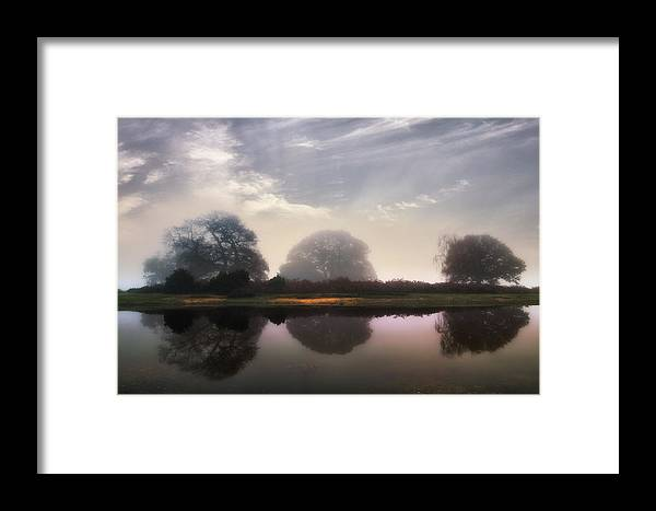 New Forest Framed Print featuring the photograph New Forest - England by Joana Kruse