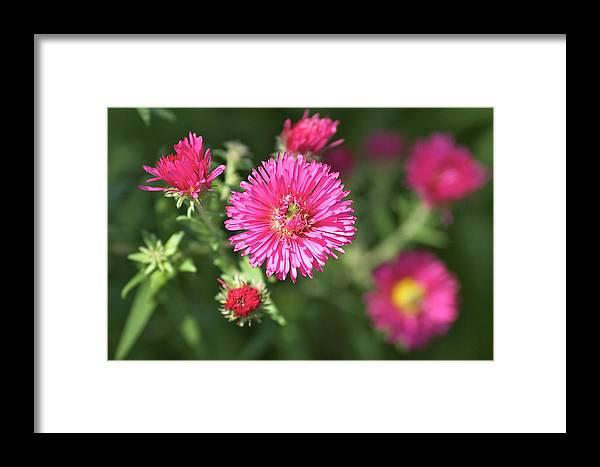 Summer Framed Print featuring the photograph 3d Flower by Robert Joseph
