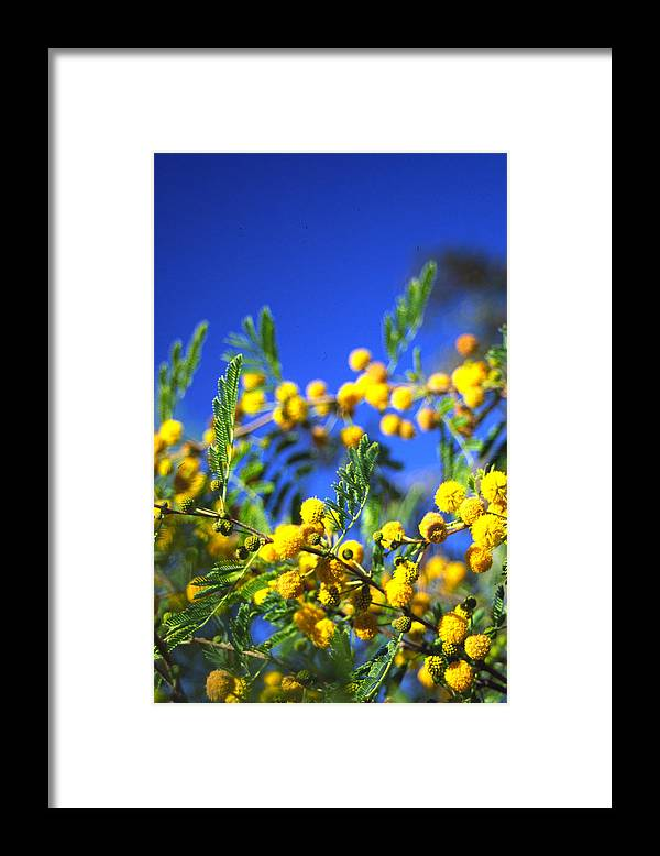 Tree Blooms Framed Print featuring the photograph 3rd Dimension by Randy Oberg