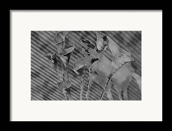 Flowers Framed Print featuring the painting Calla Lilies by Gary at TopPhotosI