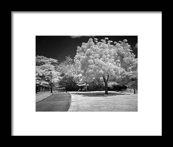 Garden Framed Print featuring the photograph Magic Garden by Galeria Trompiz