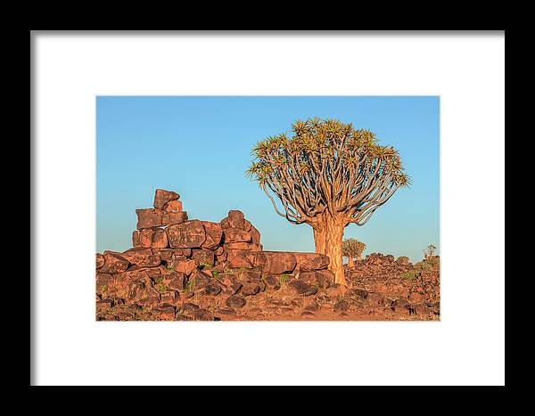 Quiver Tree Forest Framed Print featuring the photograph Quiver Tree Forest - Namibia by Joana Kruse