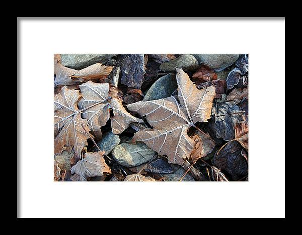 Leaf Framed Print featuring the photograph Untitled by Kathy Schumann