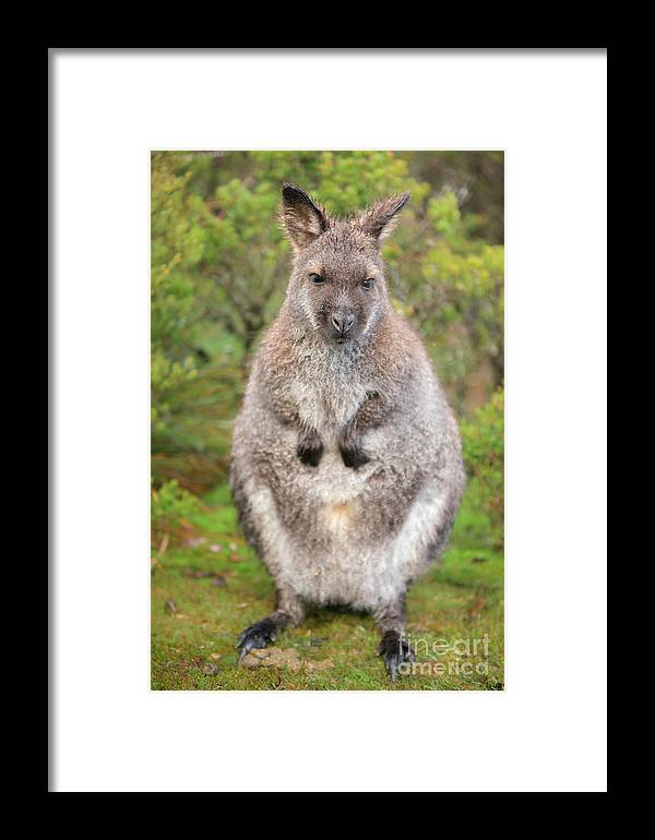 Animal Framed Print featuring the photograph Wallaby Outside By Itself by Rob D