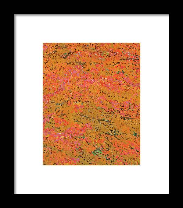Maple Tree Framed Print featuring the photograph 4139 Flaming Maple by Darrel Giesbrecht