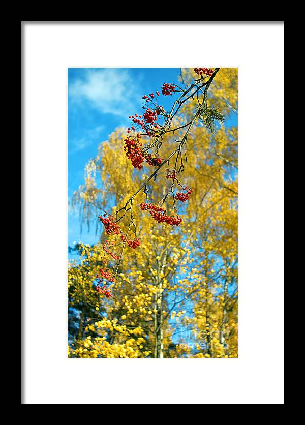 Tree Framed Print featuring the photograph Untitled by Vadim Grabbe