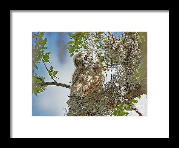 Framed Print featuring the photograph 4809 by Don Solari