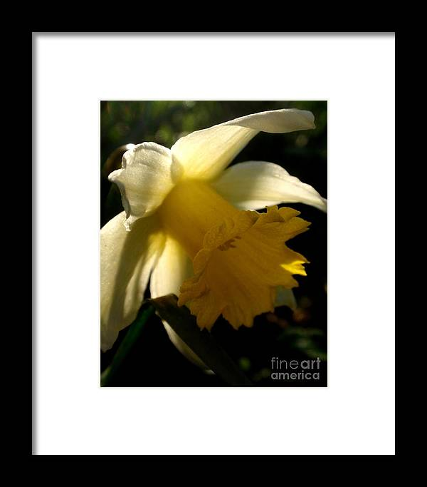 Nature Framed Print featuring the photograph Scent Of Spring by Valia Bradshaw