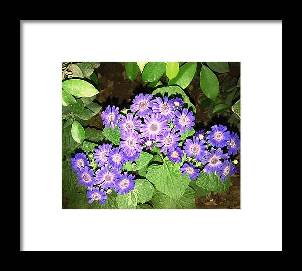 Nature Framed Print featuring the photograph Flowers by Baljit Chadha