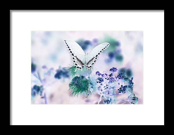 Air Framed Print featuring the photograph 5844 2 by Jim Simms