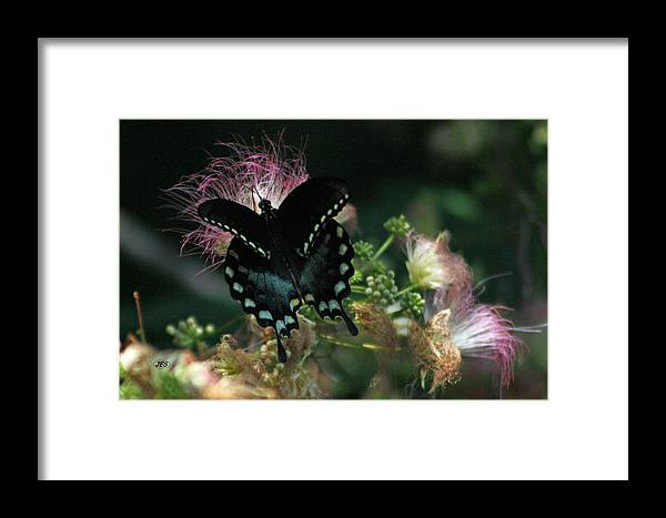 Air Framed Print featuring the photograph 5848 1 by Jim Simms