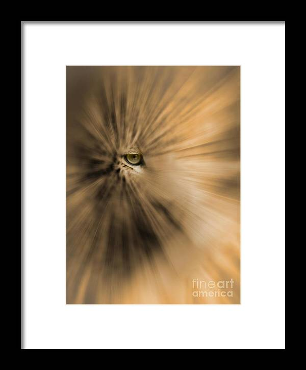 Eye Of The Creature Framed Print featuring the photograph Msc by Caddelle Faulkner