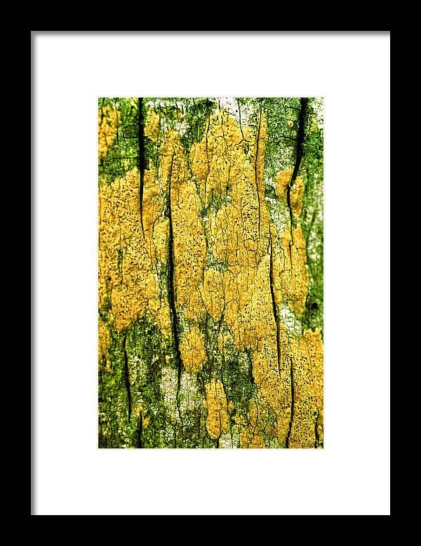Vertical Framed Print featuring the photograph Tree Bark by John Foxx