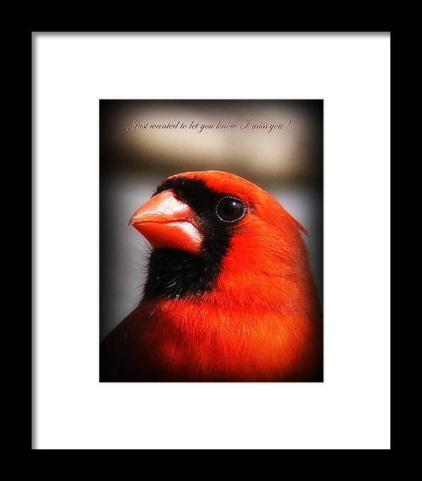 Cardinal Framed Print featuring the photograph 6751-010 Cardinal - Miss You by Travis Truelove