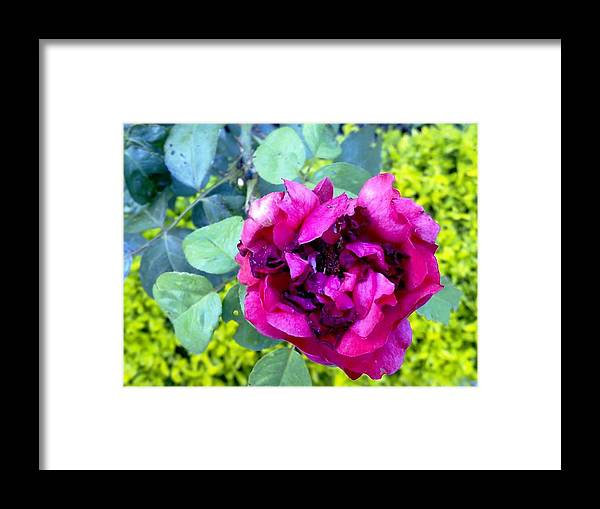 Flowers Framed Print featuring the photograph Flowers by Bali Chadha