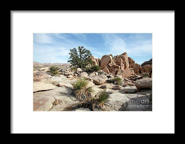 Joshua Tree Framed Print featuring the photograph Joshua Tree National Park, California by Gal Eitan