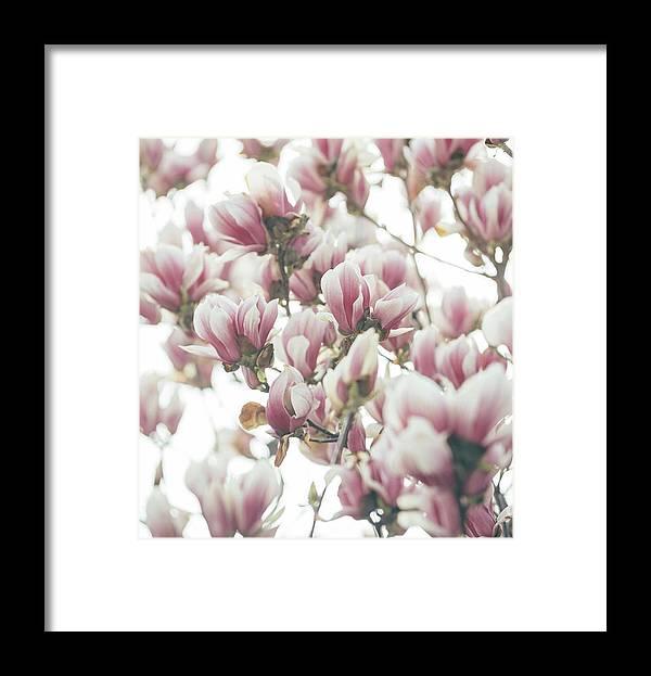 Magnolia Framed Print featuring the pyrography Magnolia by Jelena Jovanovic