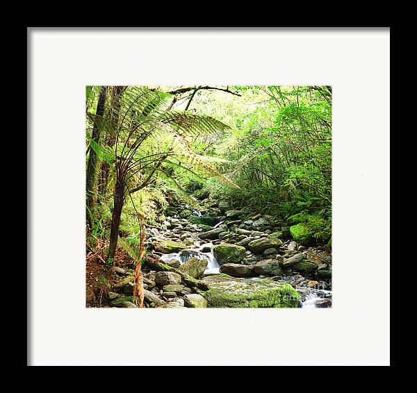 Native Framed Print featuring the photograph Native Bush by MotHaiBaPhoto Prints