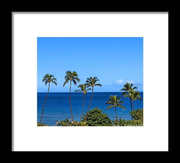 Palm Trees Framed Print featuring the photograph 7 Palms by Nicole I Hamilton