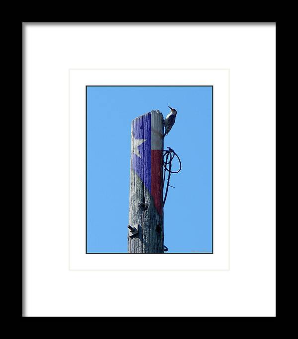 Barbara Tristan Framed Print featuring the photograph #8667 Woodpecker by Barbara Tristan