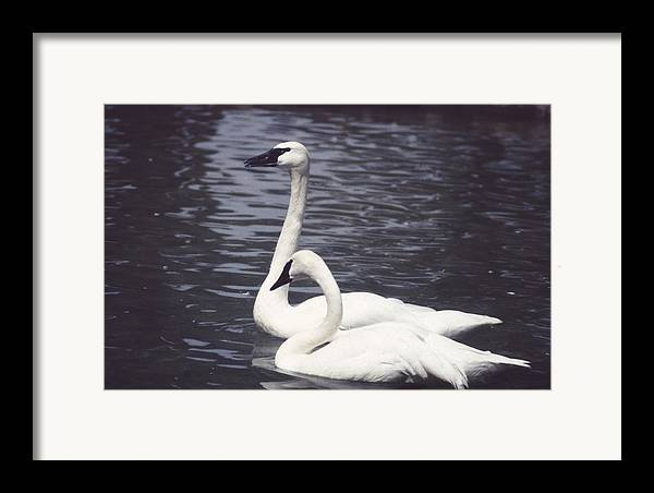 Swan Framed Print featuring the photograph 92347-8 by Mike Davis
